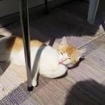 Naranjito tomando el sol