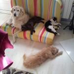 Nala Dona y sus amigas inseparables