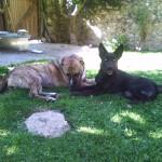 Greta y Blacky