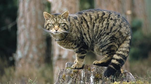 gatos-ecosistema-predadores