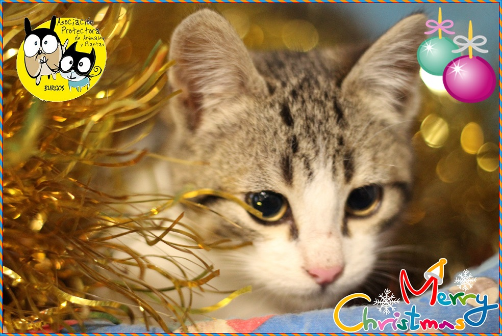 felicitacion-gato