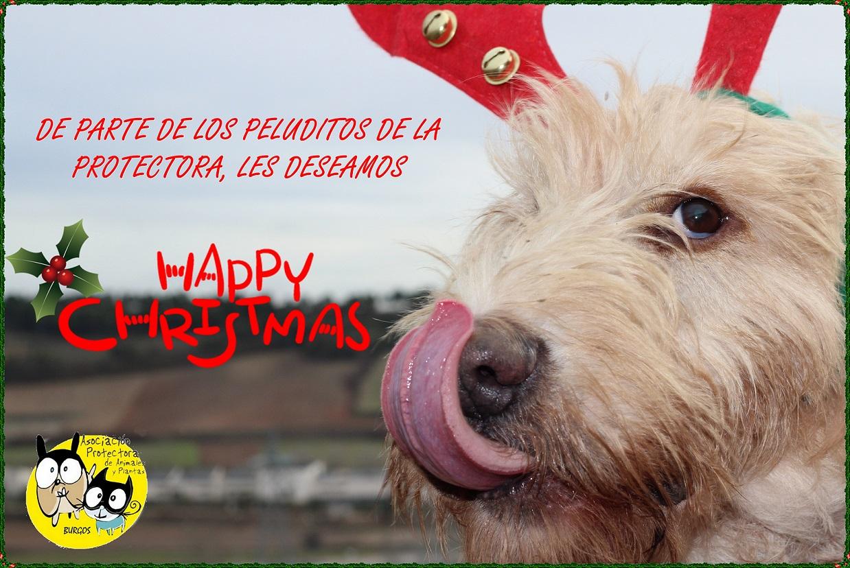 felicitacion-perro